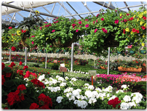 Buy Flowers including Annuals, Perennials, Terra Pots, Tomato & Veggi Plants, Hanging Baskets, Garden Soils, & Cut Flowers.
