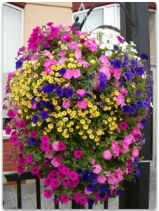 Beautiful hanging flower baskets for Mothers Day.