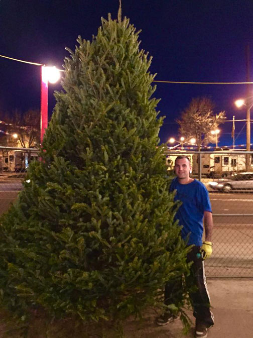 Christmas Trees For Sale In Denver Heinies Market Wheat Ridge