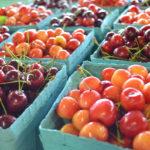 farmers-markets-denver-co